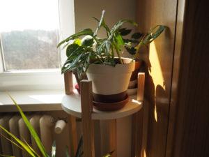 pokojovky, pěstování, pokojové rostliny, výměna pokojovek