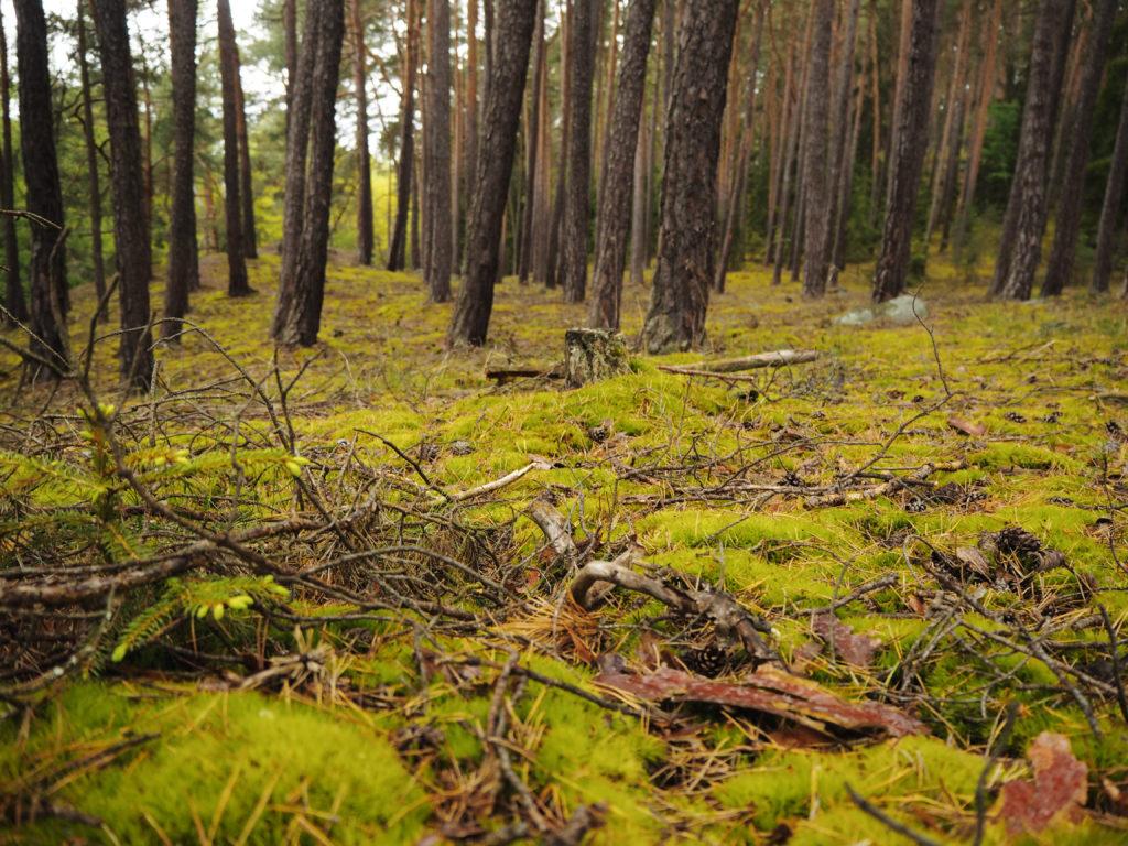 les, odpočinek